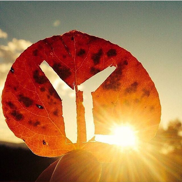 FALL. IT'S HERE. Let's celebrate with young life! Come with your flannel and your friends to Adelaide Burrows' House tomorrow at 8! 2877 Habersham Road Atlanta, GA 30305.