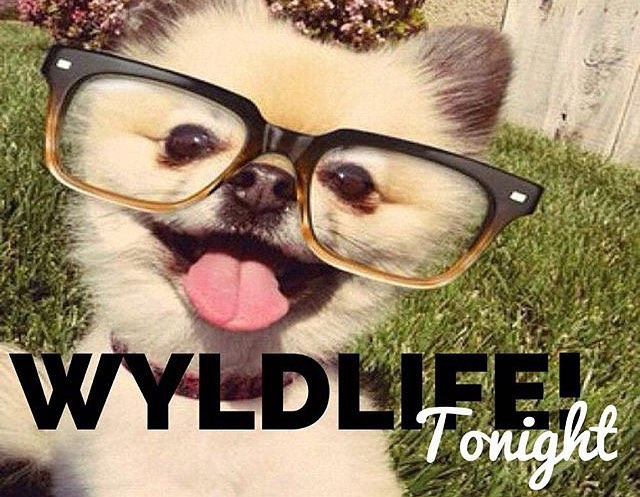 WyldLife is tonight at 565 Coldstream Ct! Be there from 7-8:30pm!