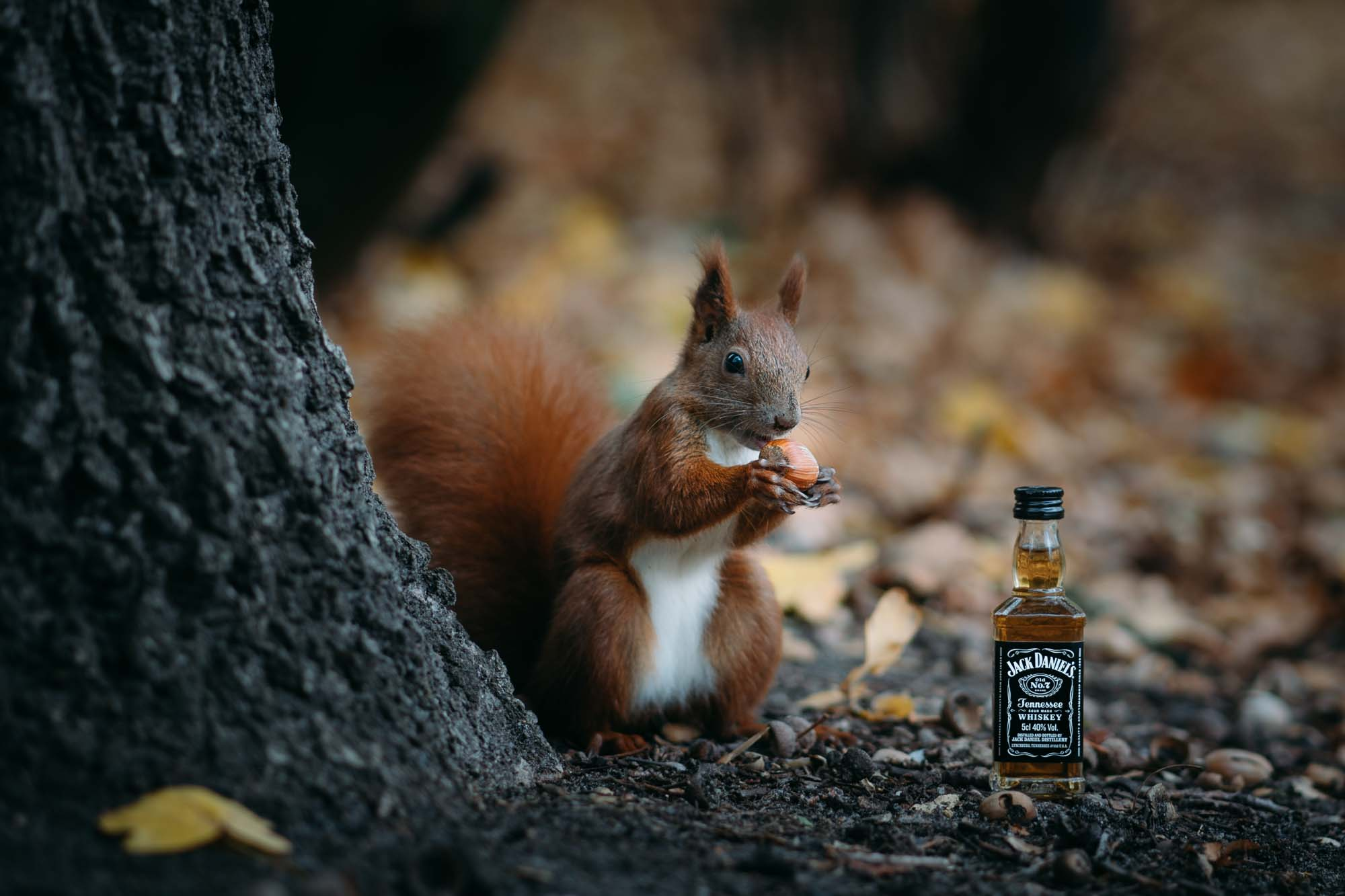 brotherside-jackdaniels-squirrel-1-3.jpg