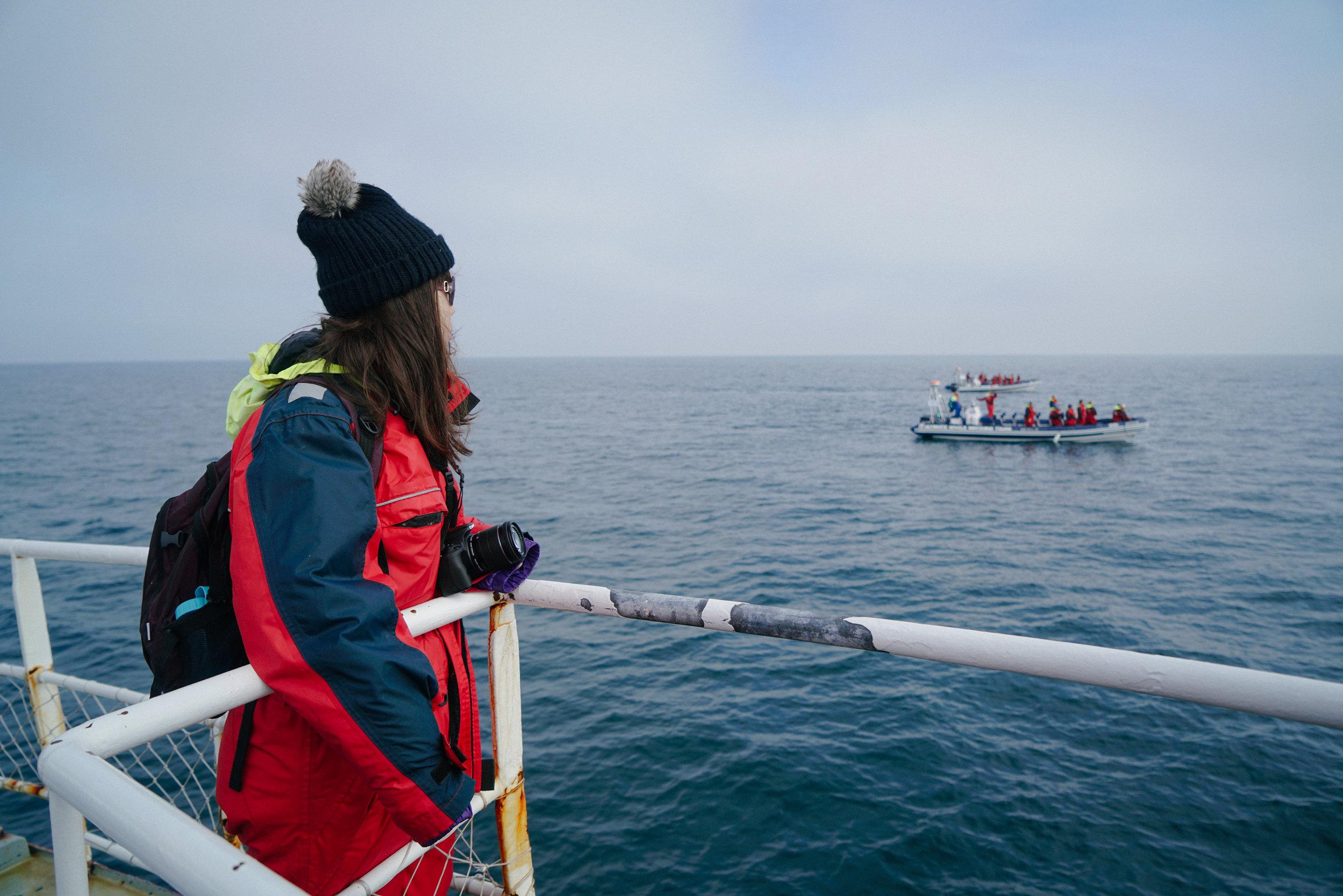 whale watchers