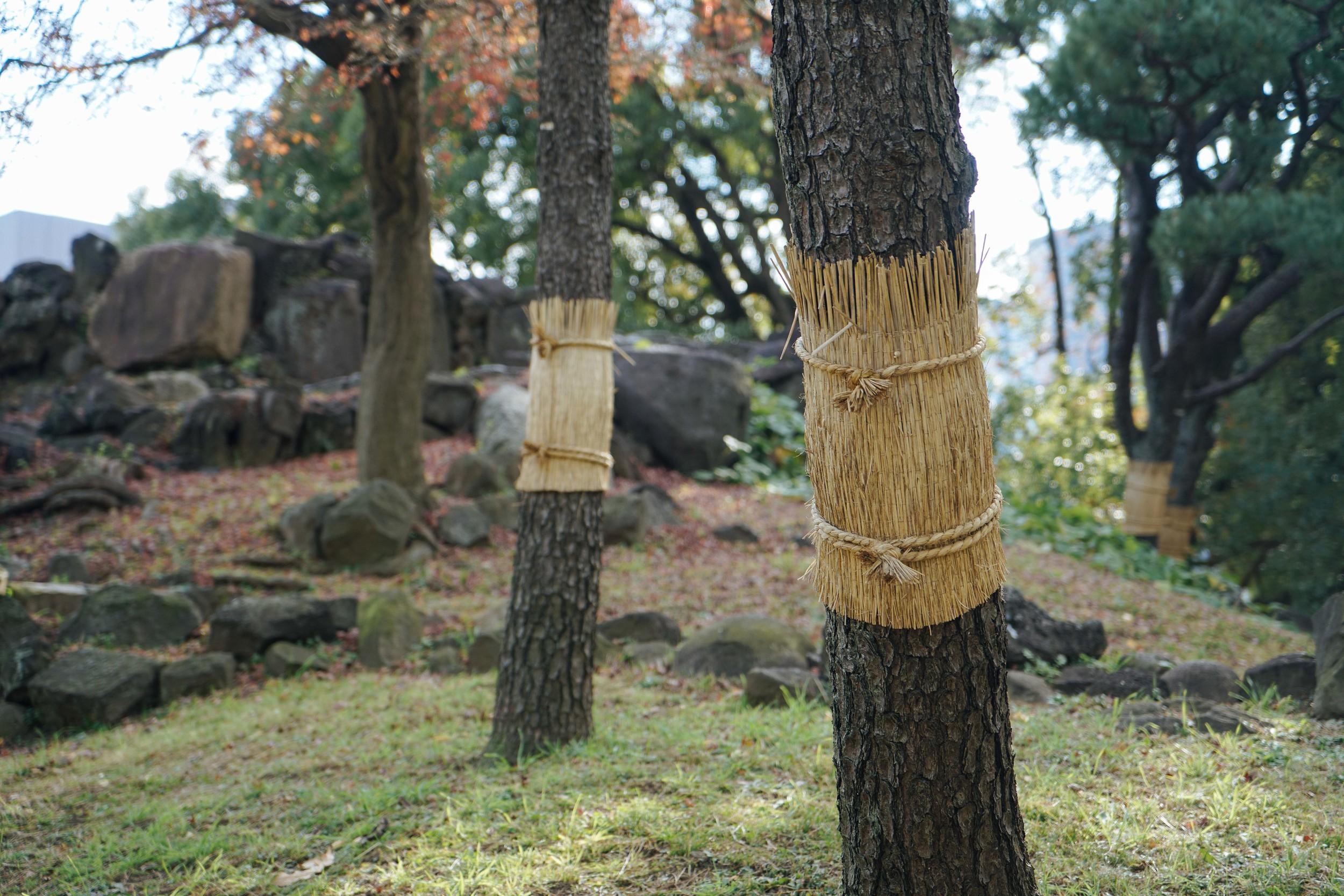 JPN-11_Trees.jpg