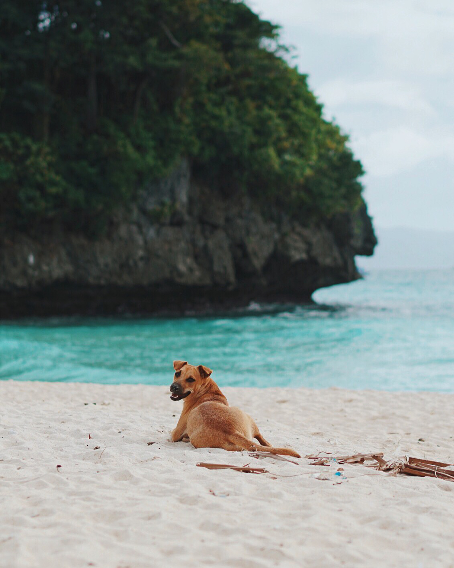 PHL-8_BeachDog-Edit2.jpg