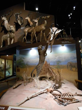 cleveland-museum-of-natural