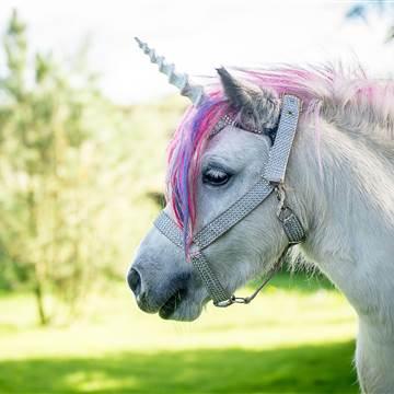 160107-unicorn-mn-1100_7e14331ecc195daf20f9b54a5d6446f8.nbcnews-fp-360-360