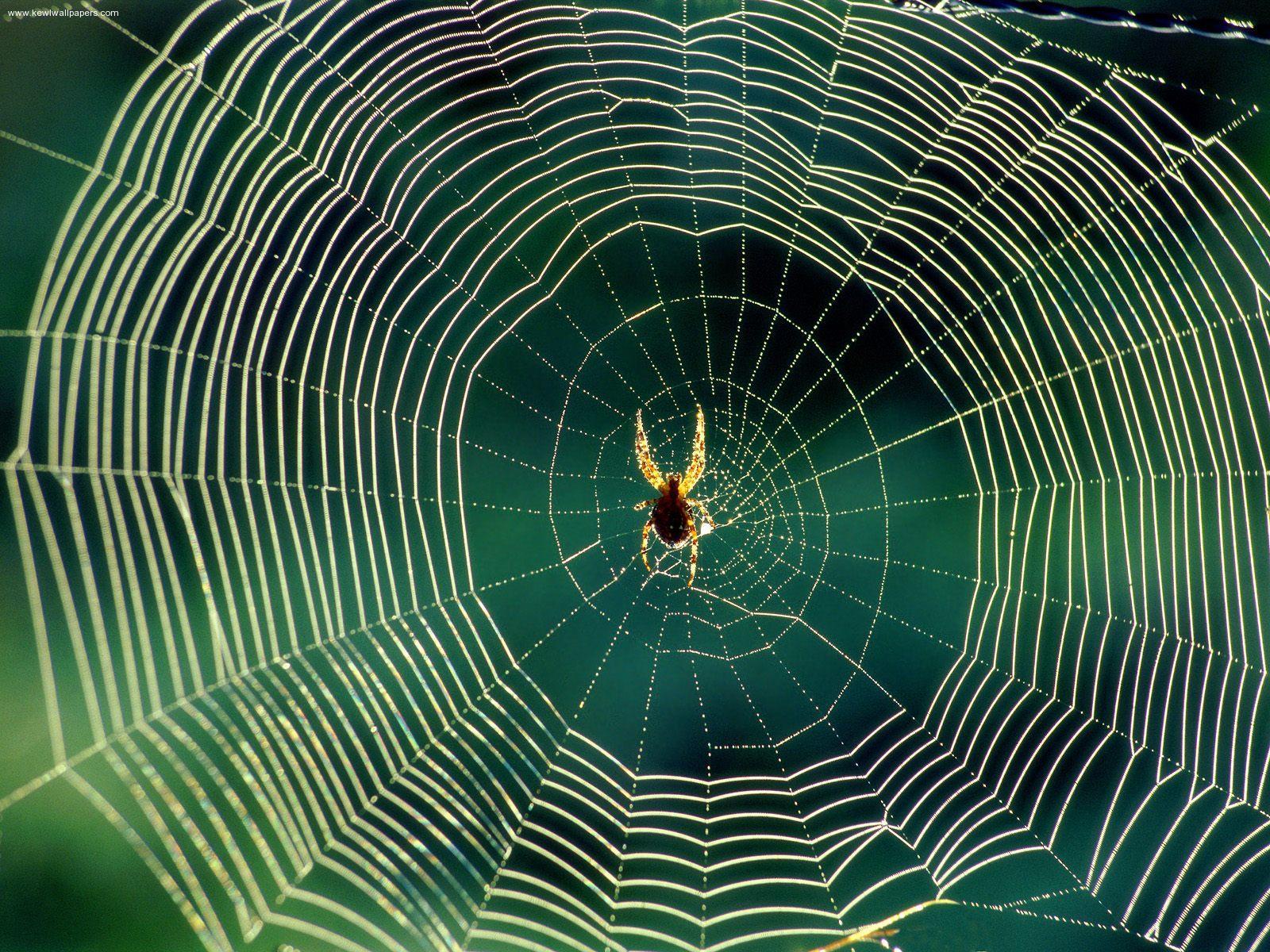 spider-web-1.jpg
