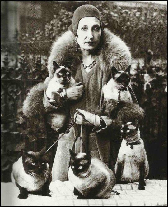 Siamese-cat-lady.jpg