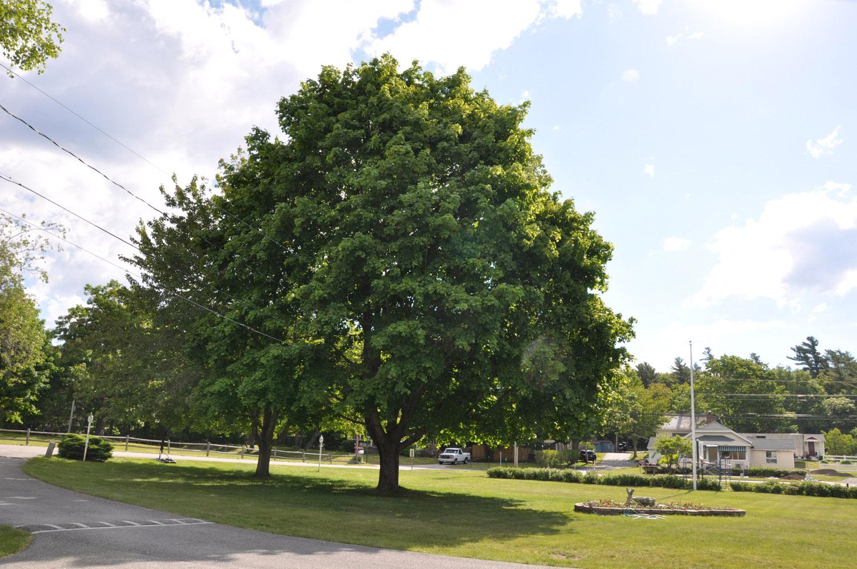 tree2 edit 1500.jpg