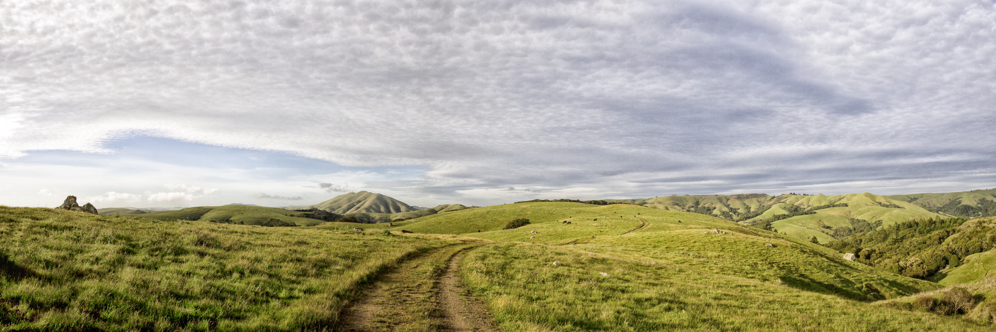 elizabeth-fenwick-photography-painterly-point-reyes-olema-elephant-moutain-bolinas-ridge-ca-sky-lines-.jpg