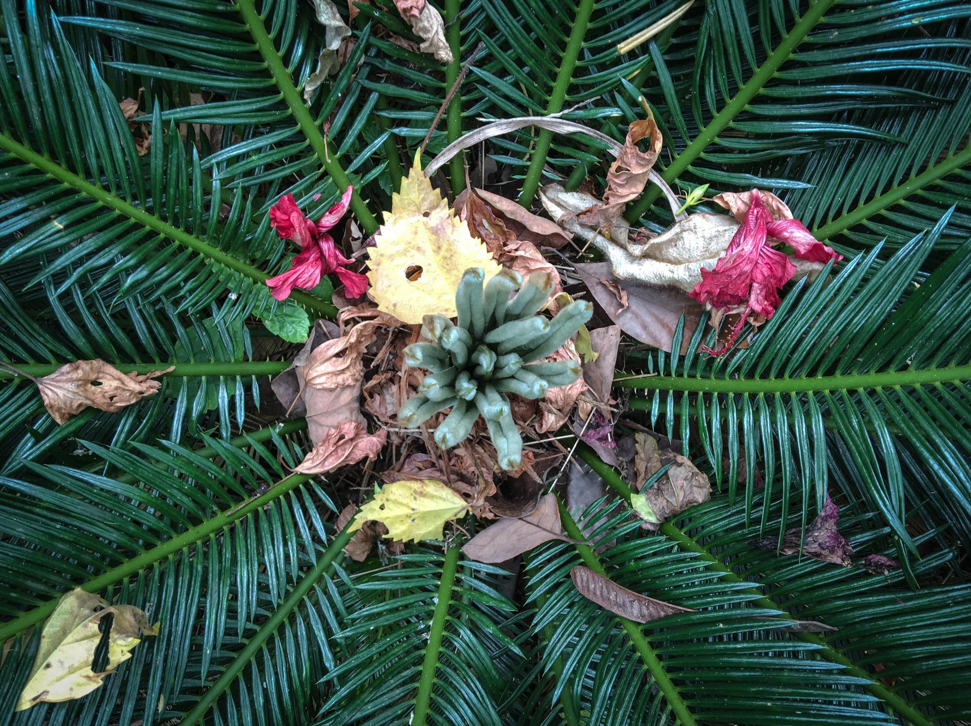 Elizabeth Fenwickflowers-Hui-Molakai-Kalainis-garden-Papohaku -1.jpg
