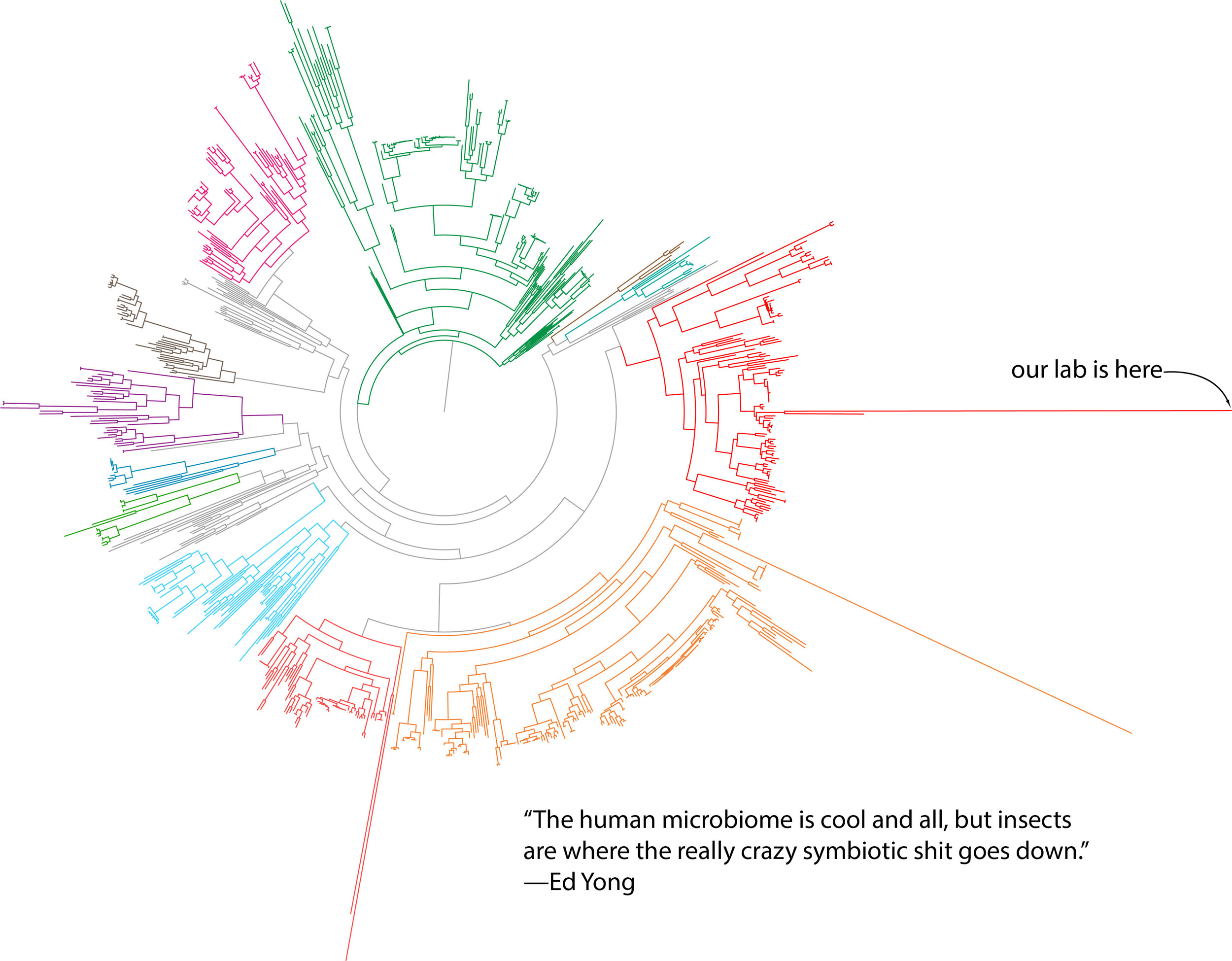A phylogenetic tree of bacteria, with colors representing various major phyla. The extremely long branches are the bacterial endosymbionts of insects—the bacteria with the smallest genomes, the fastest rates of evolution, and the most dependency on their hosts. (Image adapted from McCutcheon JP and Moran NA. 2012. Extreme genome reduction in symbiotic bacteria.  Nature Reviews Microbiology  10:13-26. The Ed Yong quote is awesome, 100% correct, and is from Twitter, 18 May 2015.)