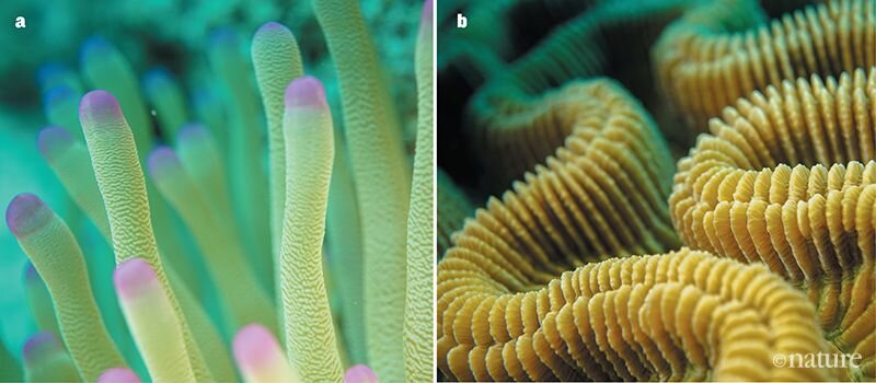 Patrick Keeling takes beautiful pictures of anemones (left) and corals (right).