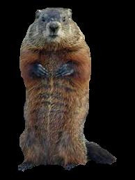 groundhog-png-hd-vandalia-groundhog-removal-for-groundhog-under-the-porch-groundhog-under-the-deck-and-groundhog-under-the-shed-groundhogs-live-under-sheds-194.png