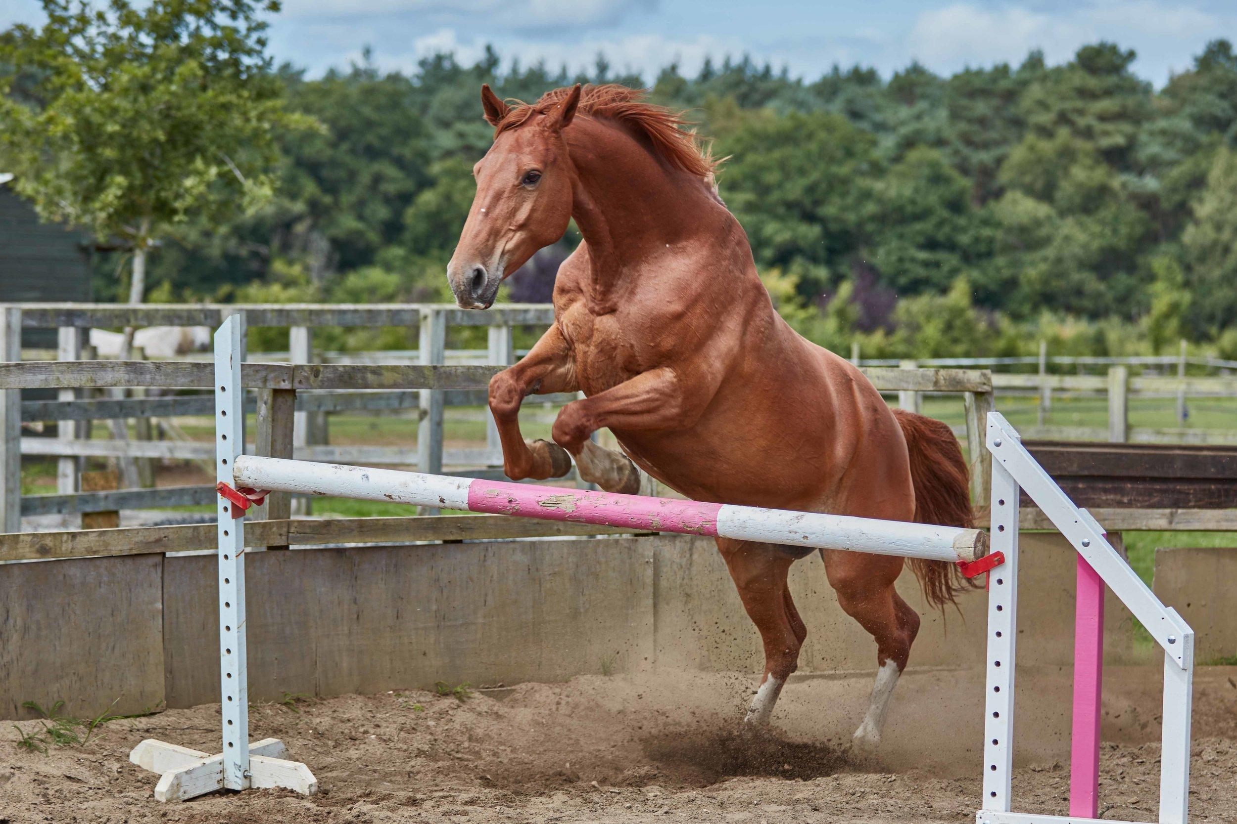 Khailun Lir Rehman Horse Riding School - Islamabad,Tilford, U.K.