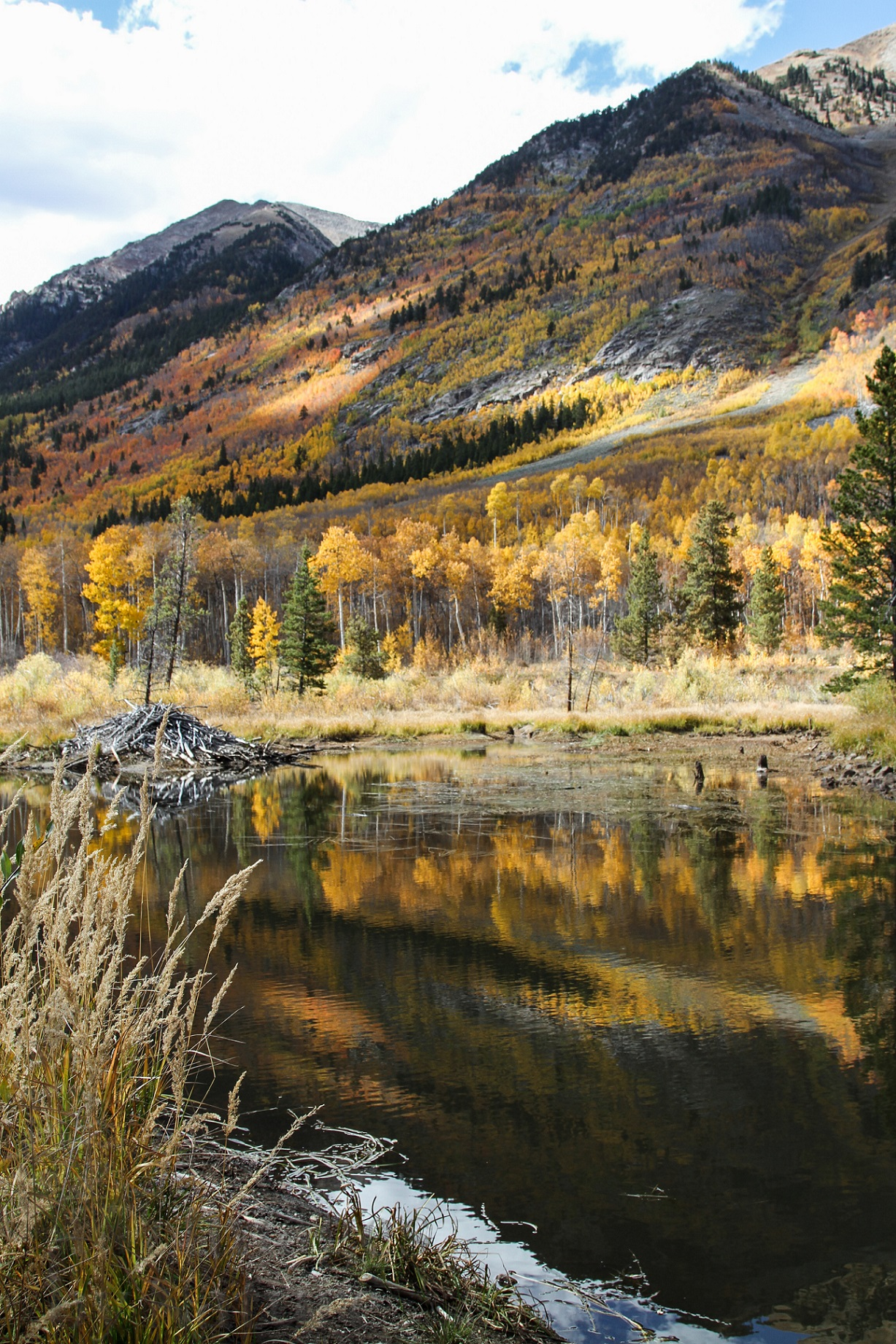 Fall Landscape Workshop - One Day