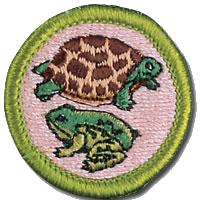 Reptile and Amphibian Study