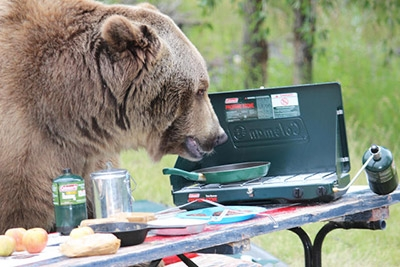 bear_coleman_stove_picnic.jpg