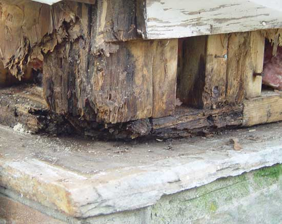 decayed-wood-corner.jpg
