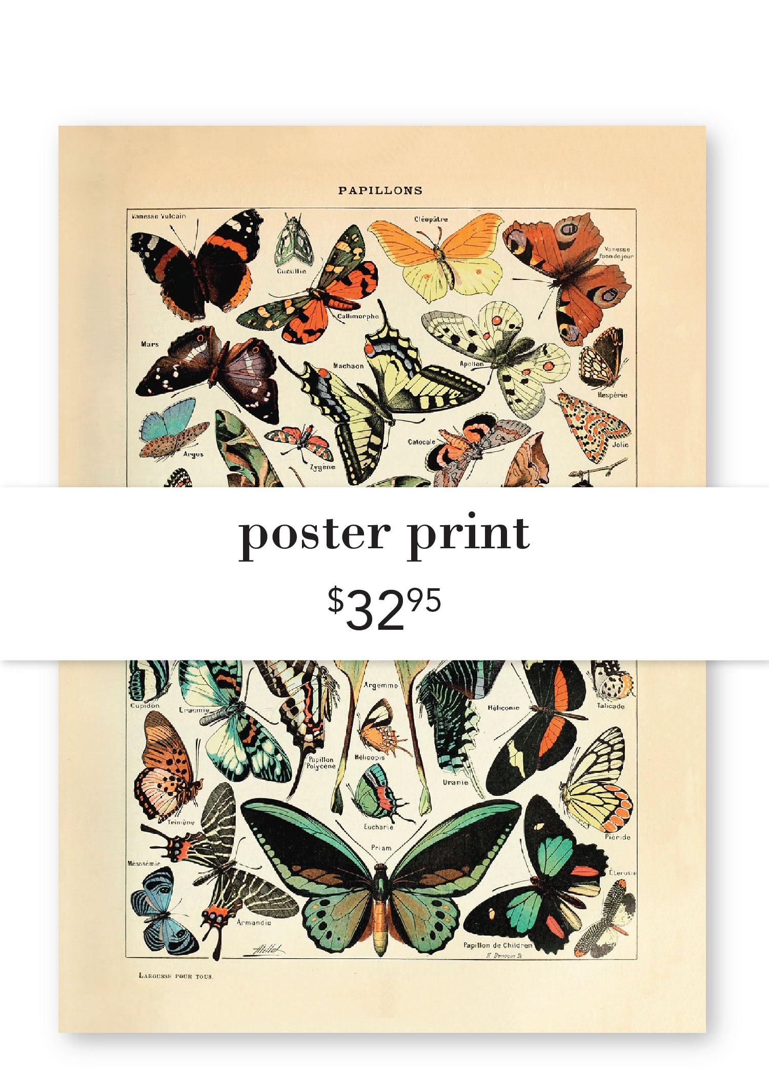 Butterfly Poster.jpg