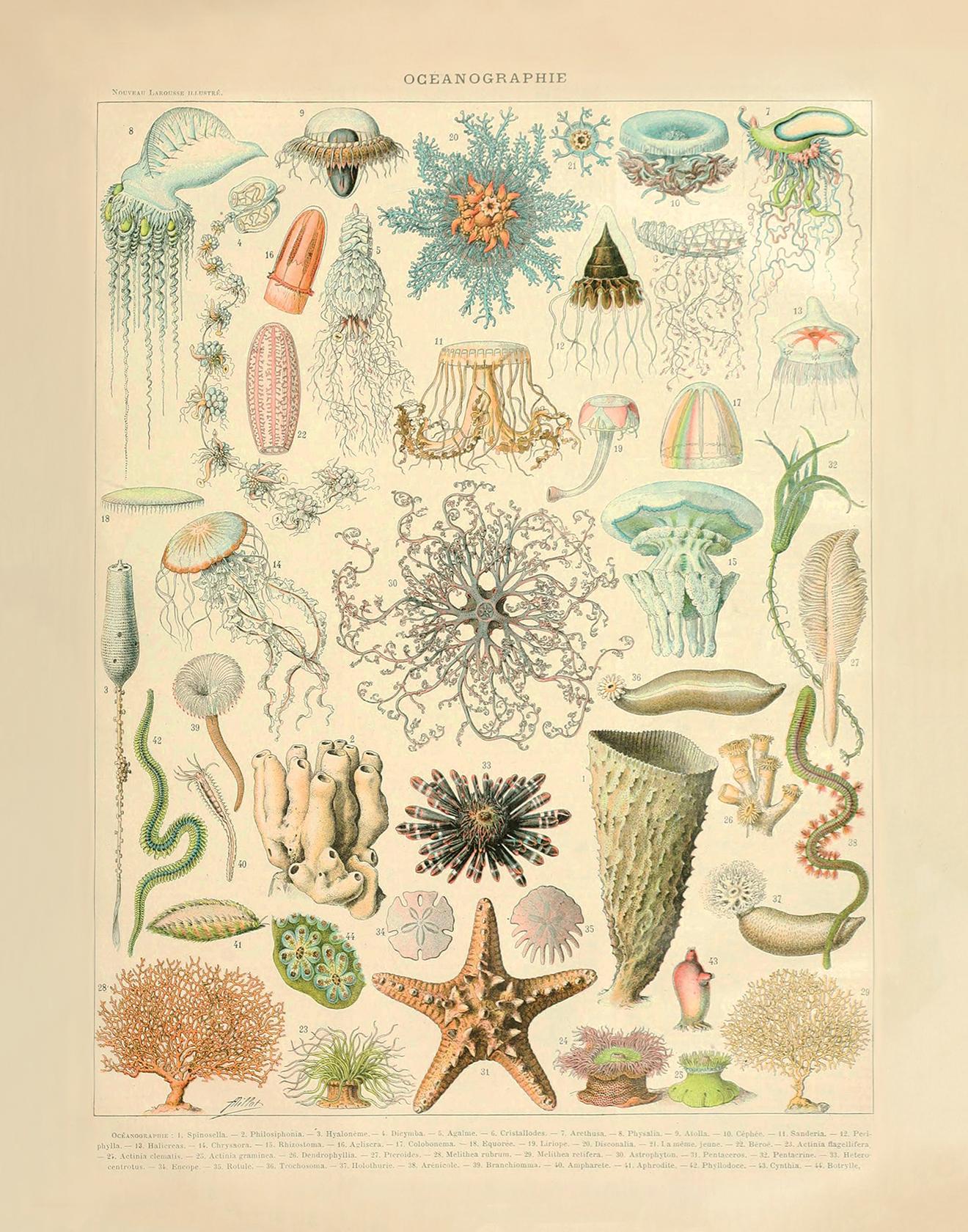 """Sea Life (22"""" x 28"""")"""