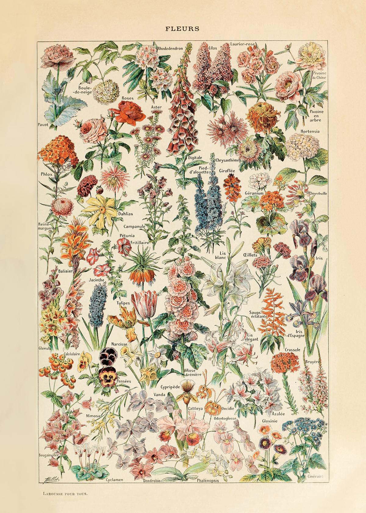"""Flowers (20"""" x 28"""")"""