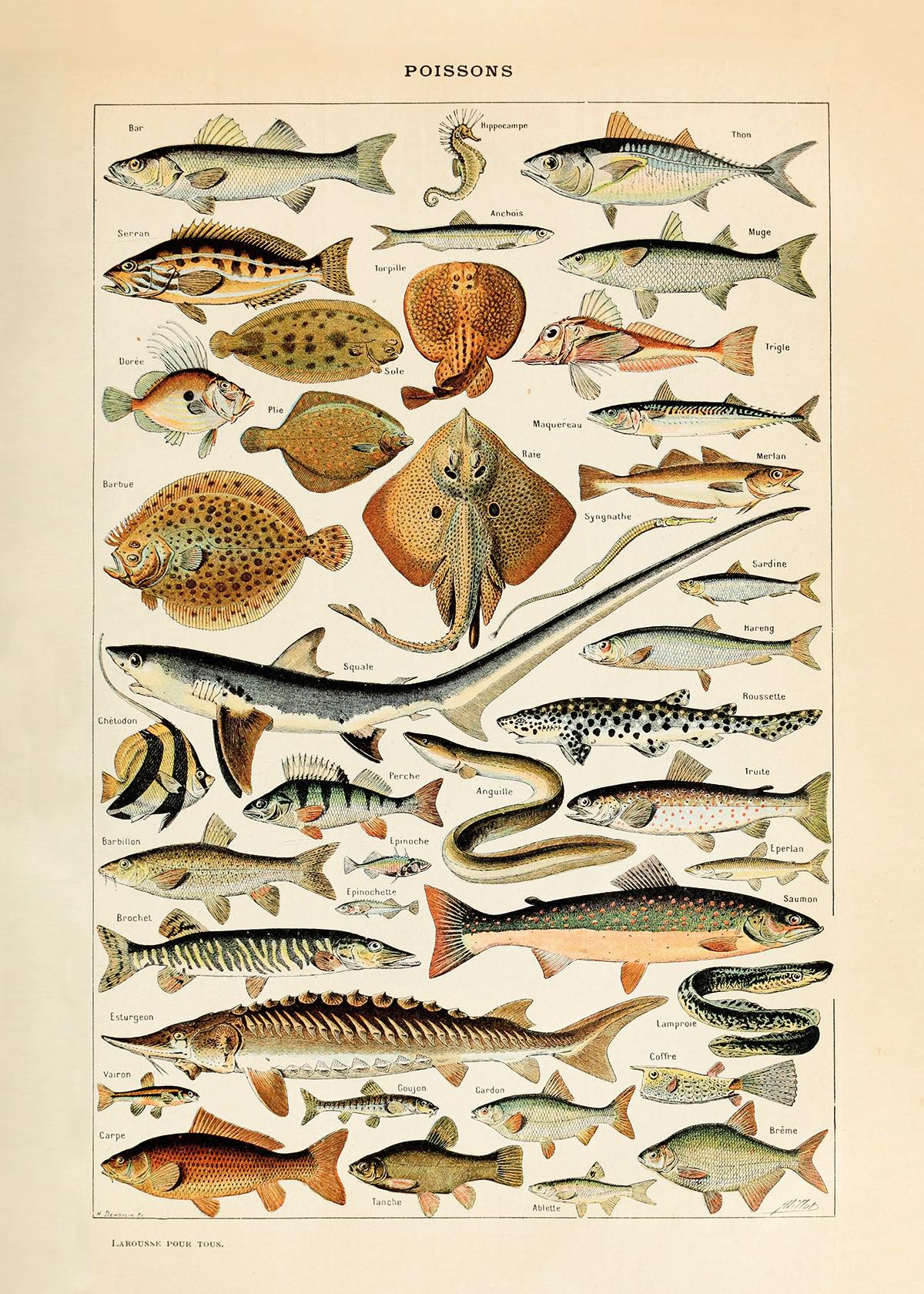 """Fish (20"""" x 28"""")"""