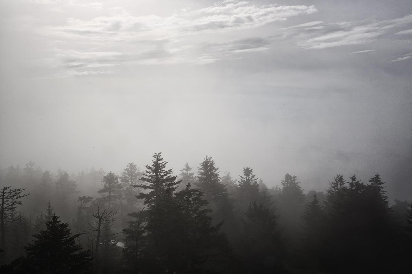 Tree_Mountain copy.jpg