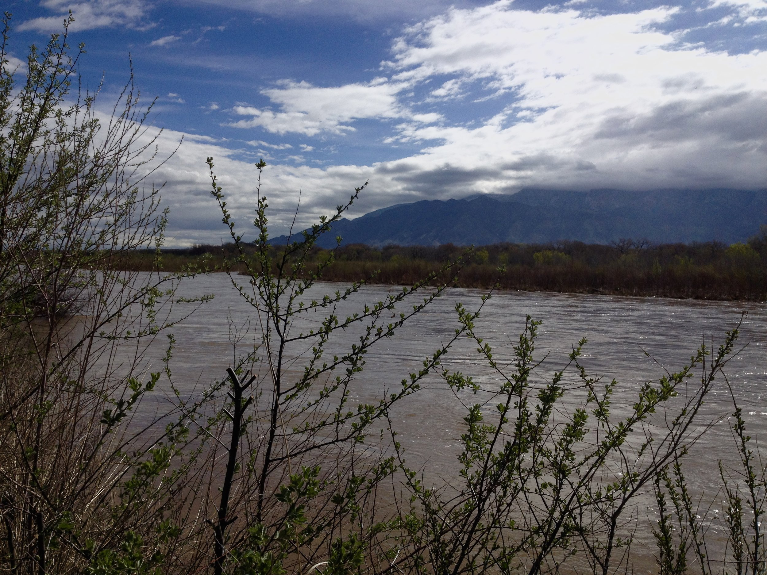 A river surrenders to its flow trusting it will reach the ocean. Rio Grande River, New Mexico, 2017