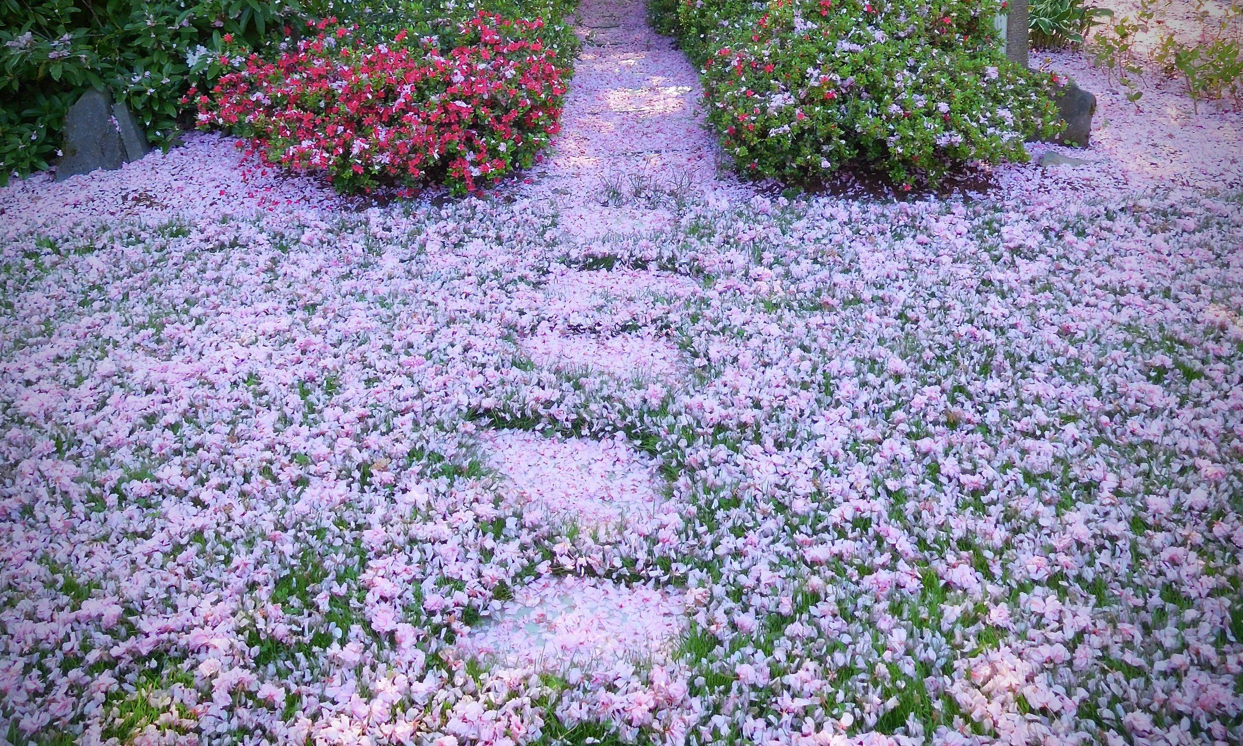 """""""Garden Transition."""" Private garden in SW Portland. Photo by anne richardson."""