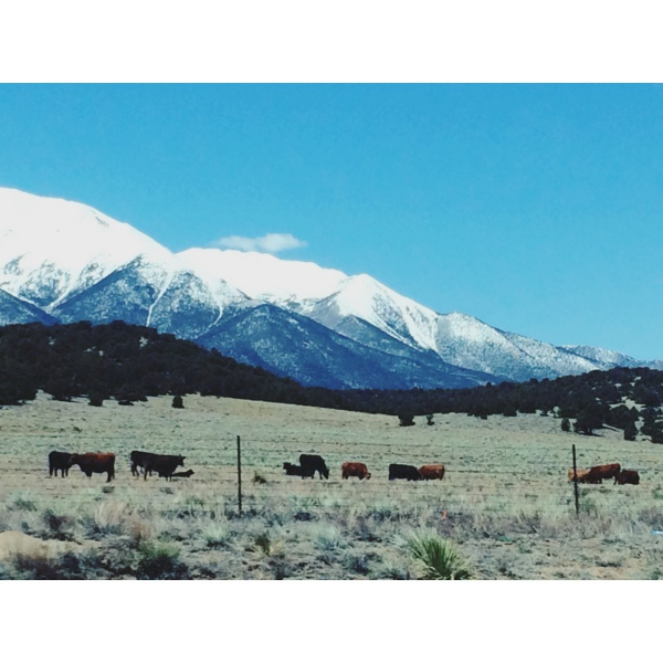 Cows, valleys and mountains