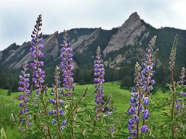 Wild flowers, Rima's favorite subject to capture via camera