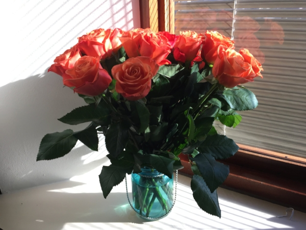 Roses for Rima