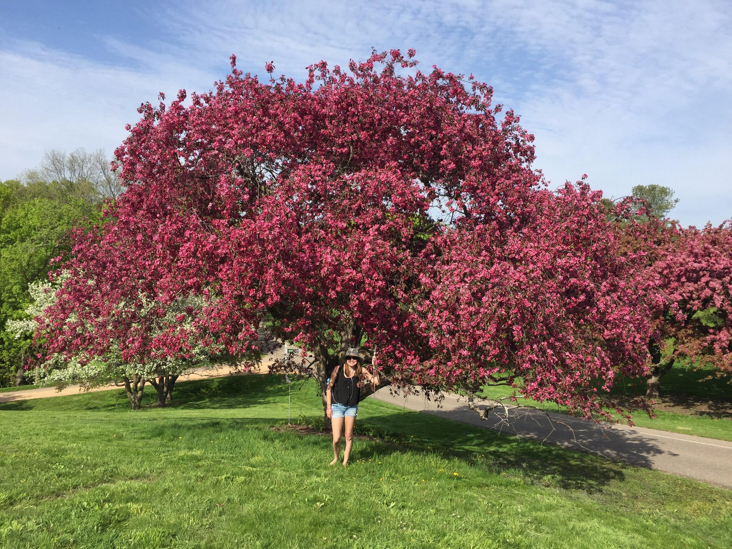 more magical trees