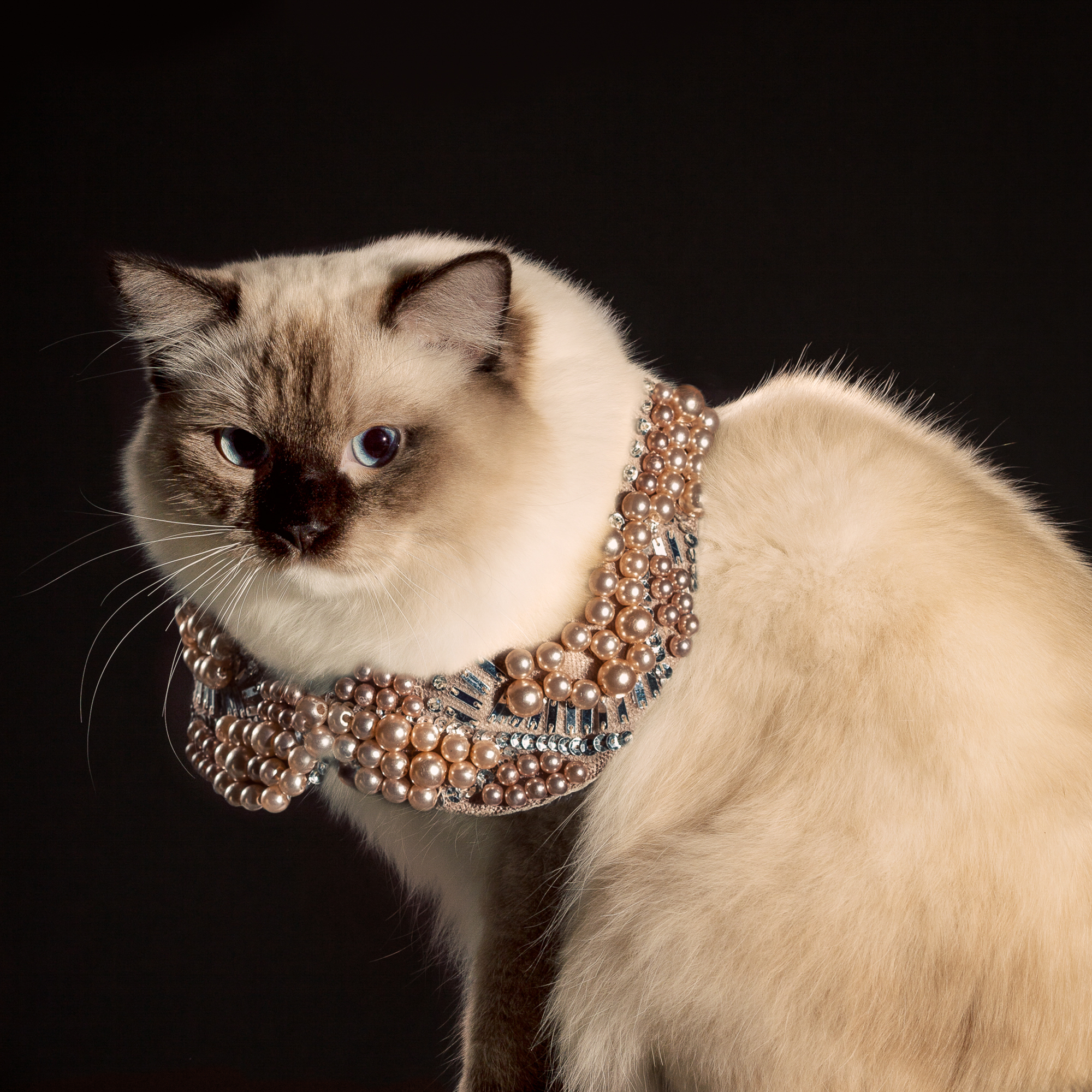 2_Holly_Andres_Elizabethan Cat Collars.jpg