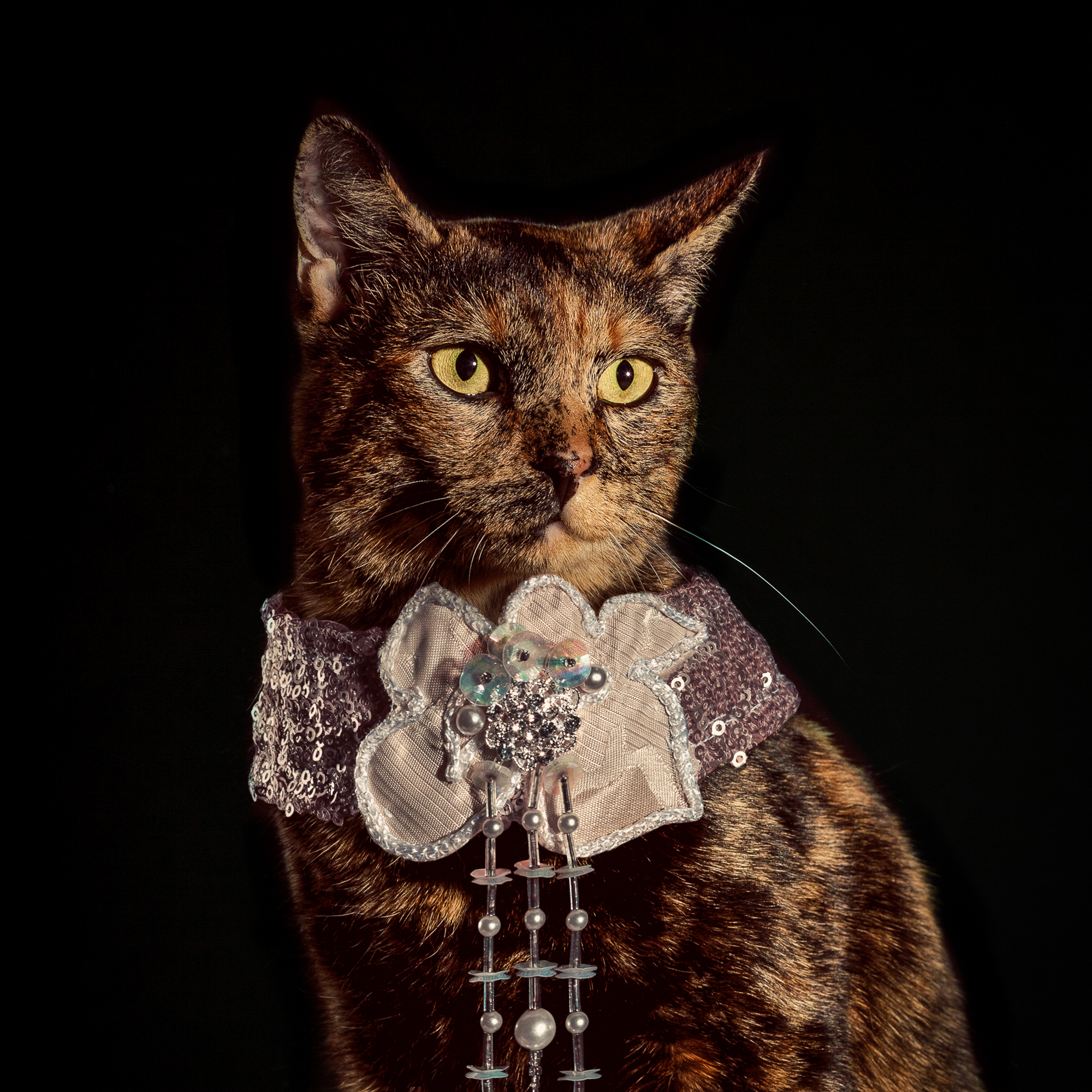 7_Holly_Andres_Elizabethan Cat Collars.jpg