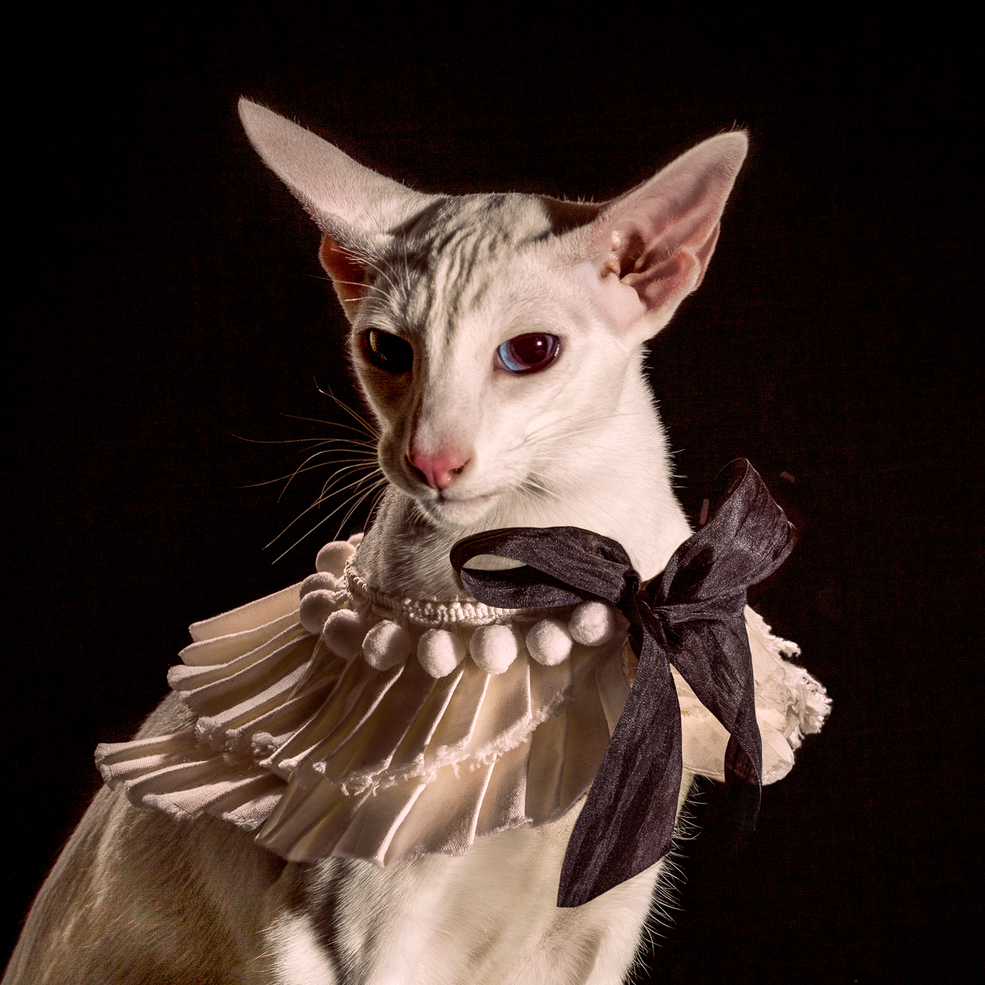 8_Holly_Andres_Elizabethan Cat Collars_ (8 of 10).jpg