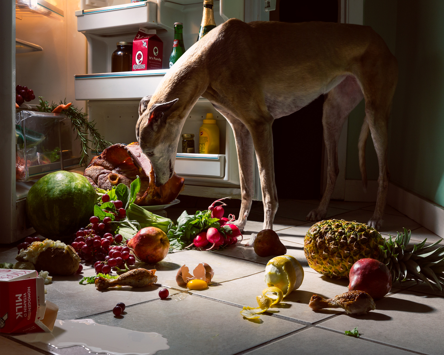 160522_Greyhounds_Midnight Snack_FINAL_1.jpg