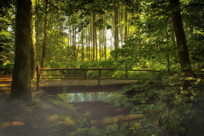 Forest bridge.jpg