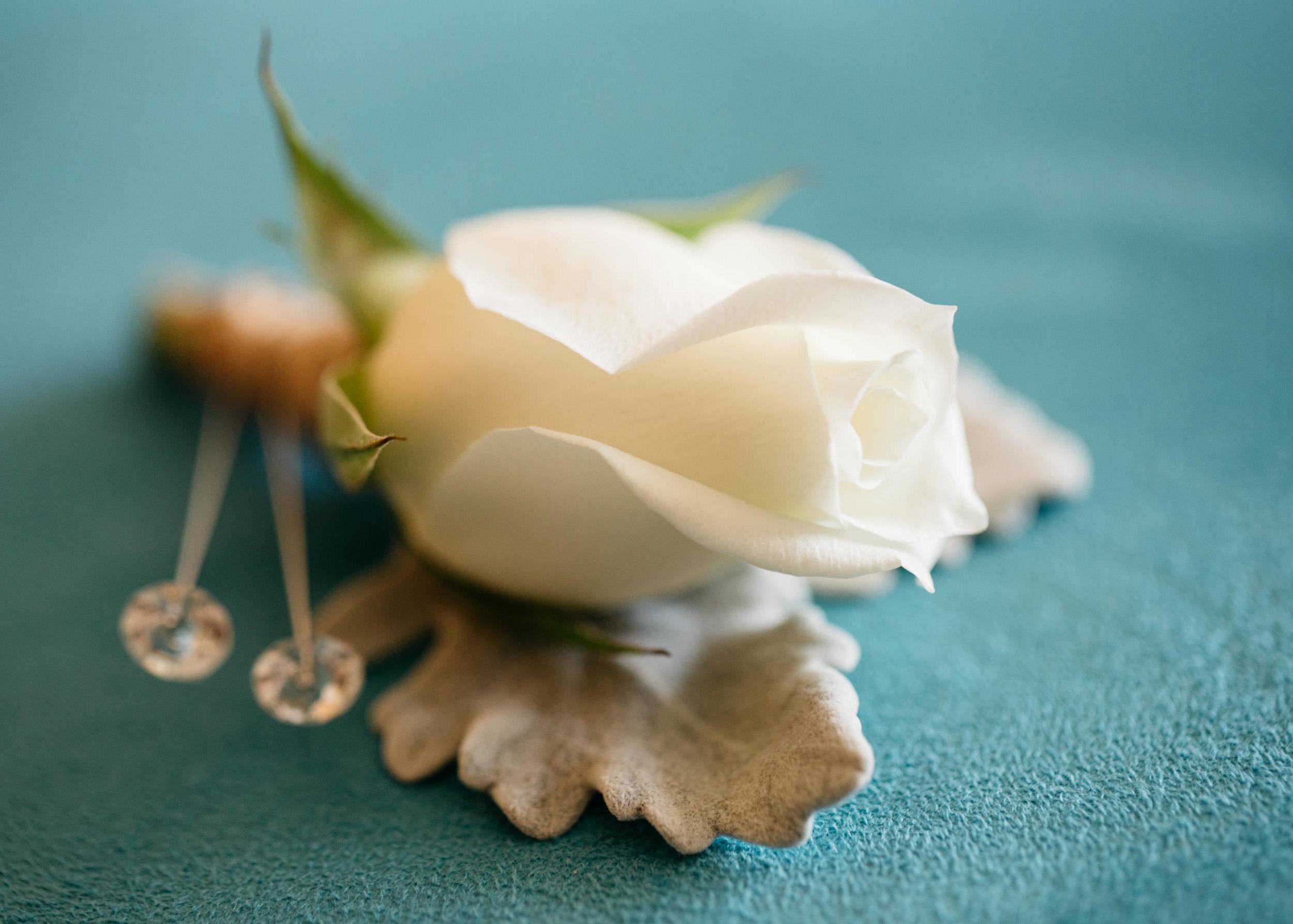 True North Photography_Boomerang Farm_Stacey and Isaac_Gold Coast Wedding_Barm Wedding_Hinterland Wedding-4.jpg