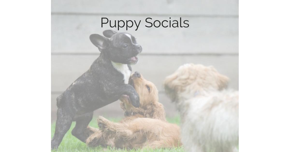 Puppy Socials