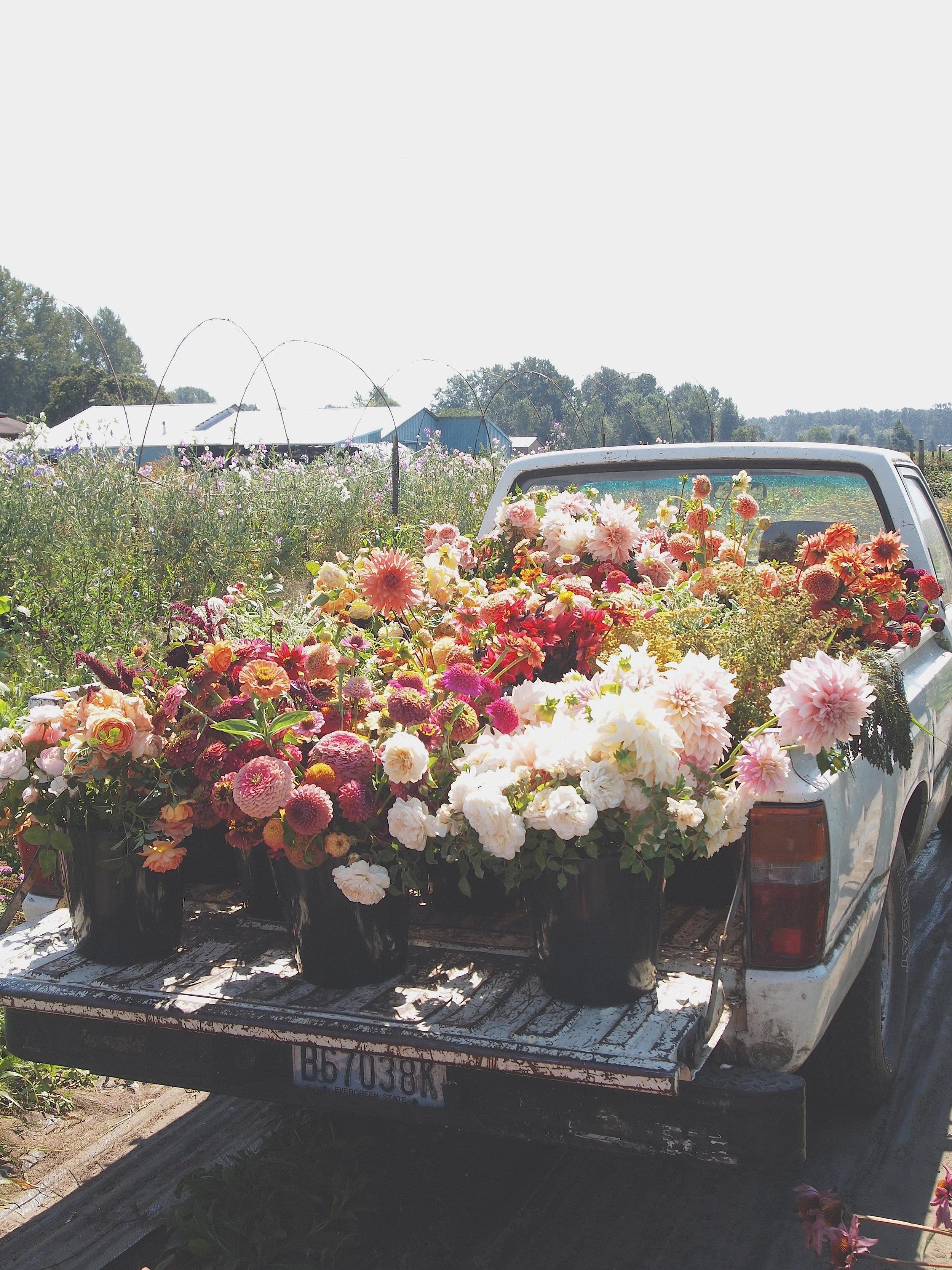 The iconic Floret Farm Truck.