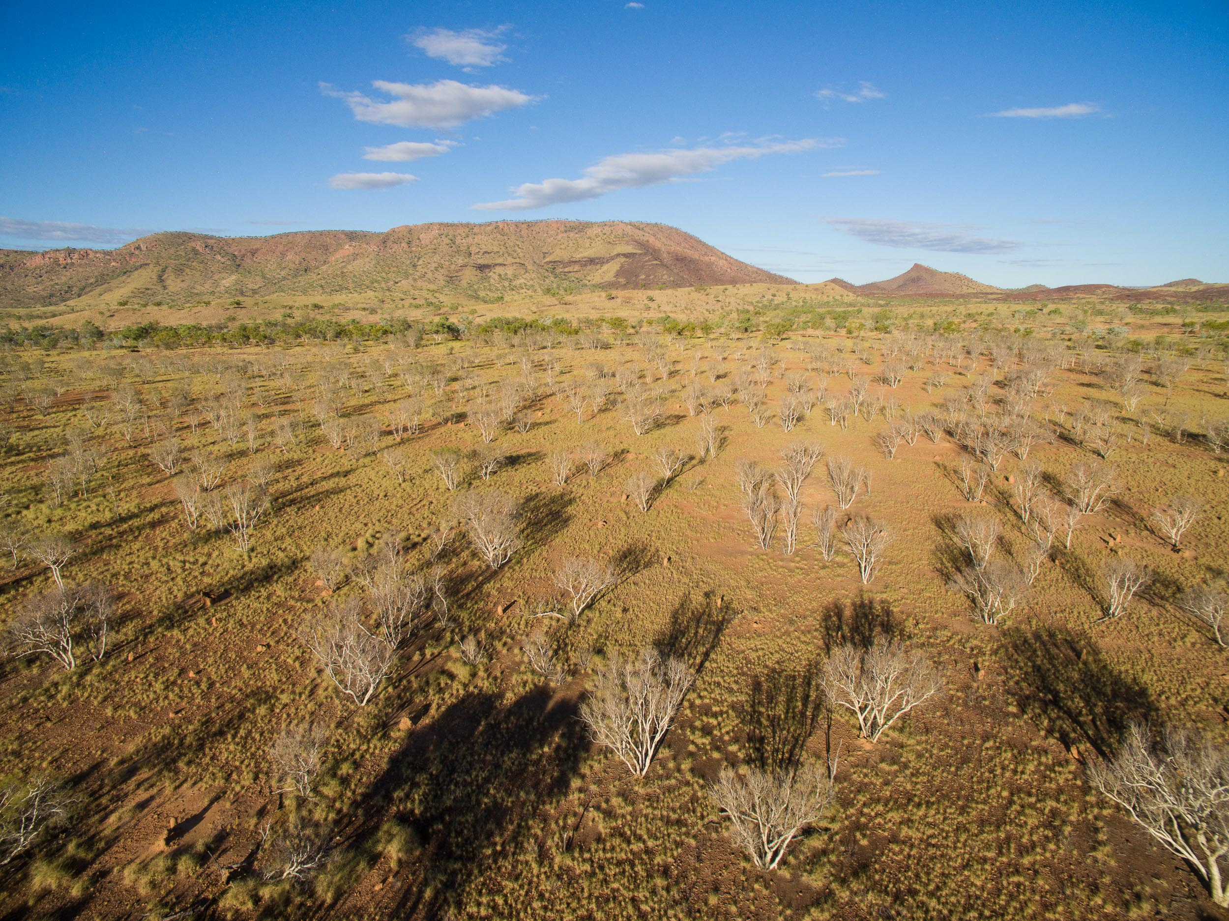 drone mandangala spinifex.jpg