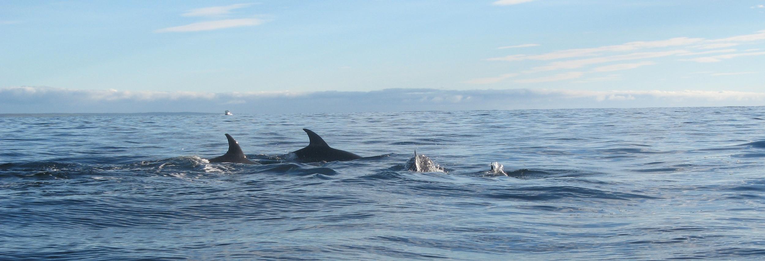 Abundant sealife