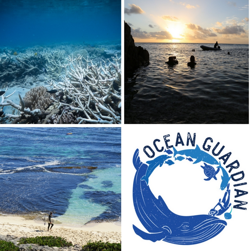 top left: from Blue, bleached coral, top right: from Blue, filming, bottom left: last Winter at the Indian Ocean, bottom right: Blue's ocean guardian campaign