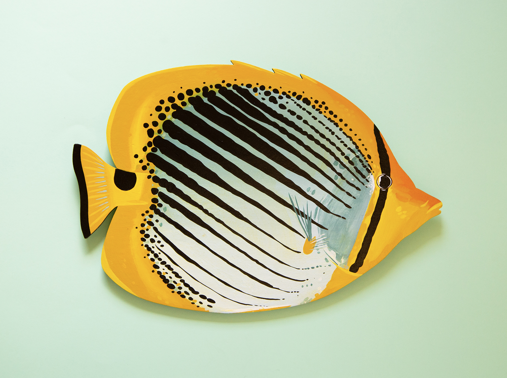 Spot-Tail-Butterflyfish-Copyright-Outer-Island