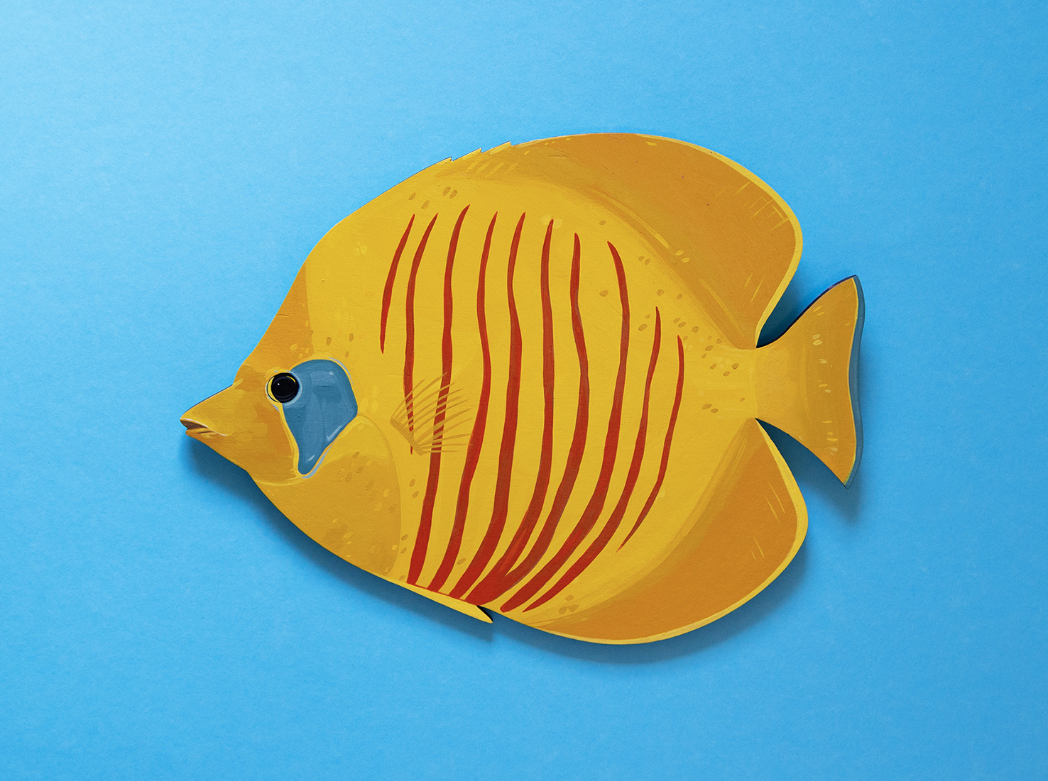 Bluecheek-Butterflyfish-Copyright-Outer-Island