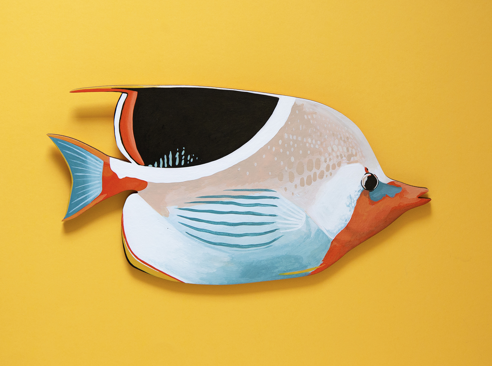 Sadle-Butterflyfish-Copyright-Outer-Island