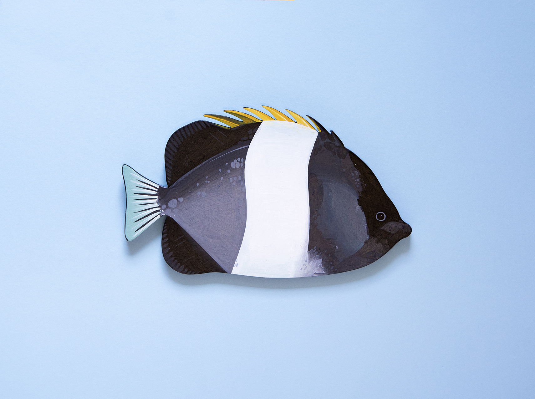 Black-Pyramid-Butterflyfish-Copyright-Outer-Island
