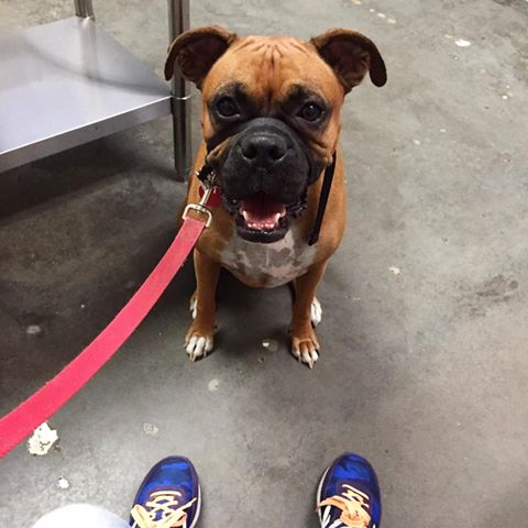 Ava the Boxer had her six-month check up . She's healthy and even has lost 5 pounds. That's something to be joyful about.