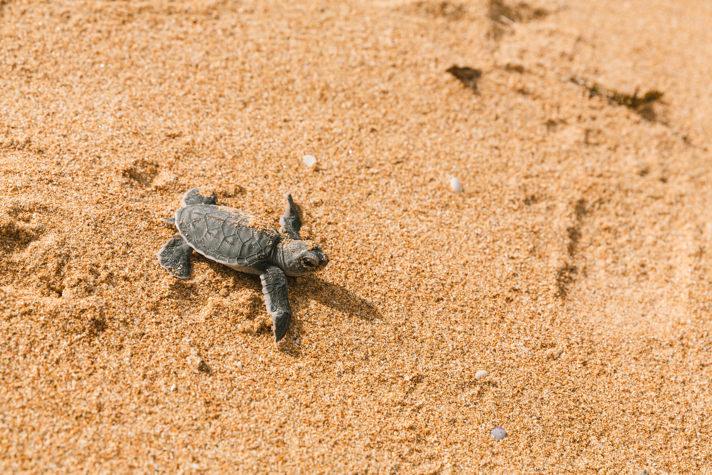 lamu_kenya_ashlee_oneil_photo_sea_turtles.jpg