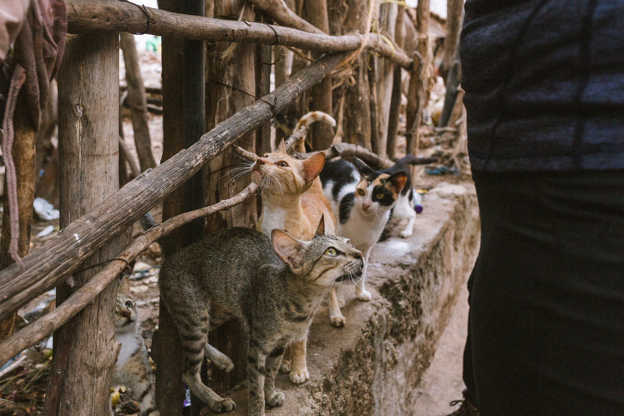 lamu_kenya_ashlee_oneil_photo_cats.jpg